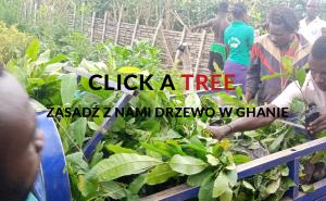 Sadzisz drzewa w Ghanie ucząc się angielskiego online w naszej szkole językowej w Warszawie.