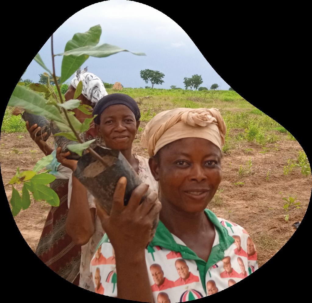 Sadzenie drzew i rozwój językowy